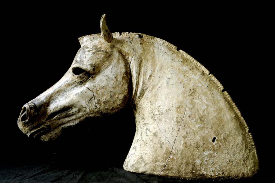 Horse head<br>By<br>Nicola Andrea Frignani