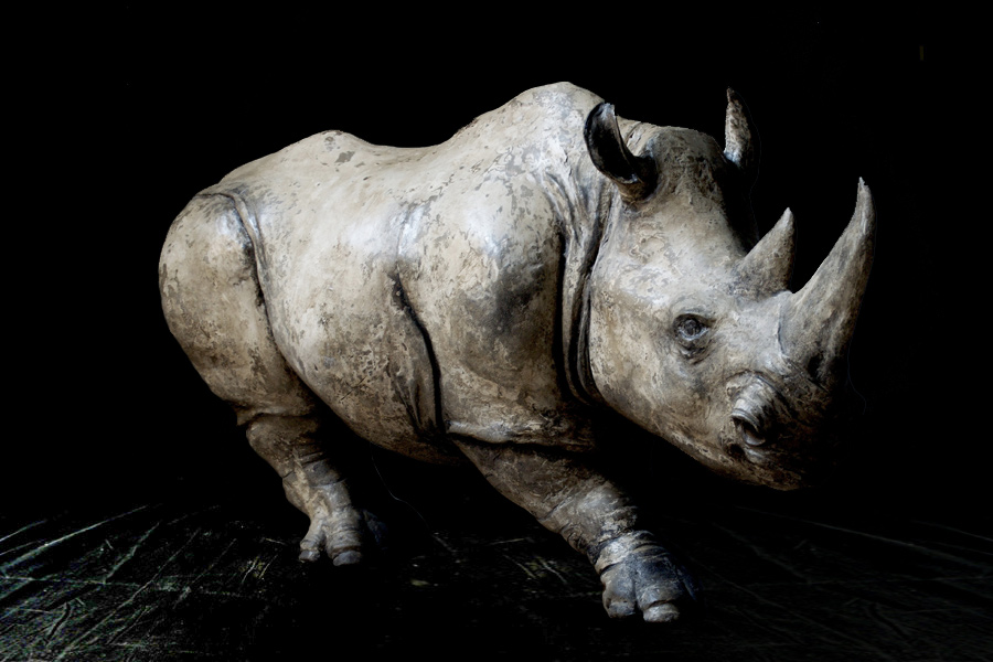 White Rhino - Sold